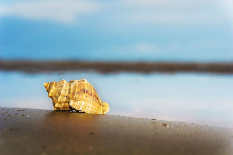 Beach Close Up Close-up Focus On Foreground Nature Outdoors Selective Focus Shell Sky Surface Level