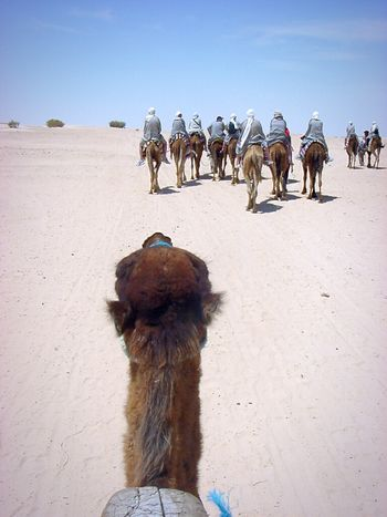So strange to travel on a Dromedary! From My Point Of View Travel Photography Tunisia The Traveler - 2015 EyeEm Awards The Adventurer - 2015 EyeEm Awards The Adventure Handbook Riding Dromedary Desert Life Eyeem Tunisia Connected By Travel