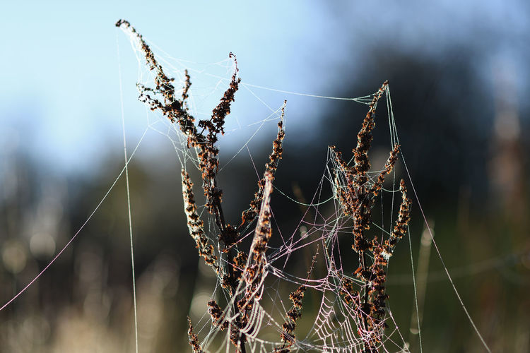 Close-up of dry spider web on plant