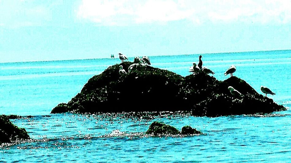 Fine Art Photography Editoftheday Goodnight Check This Out Hello World Sea And Sky Seagull Sea And Rocks
