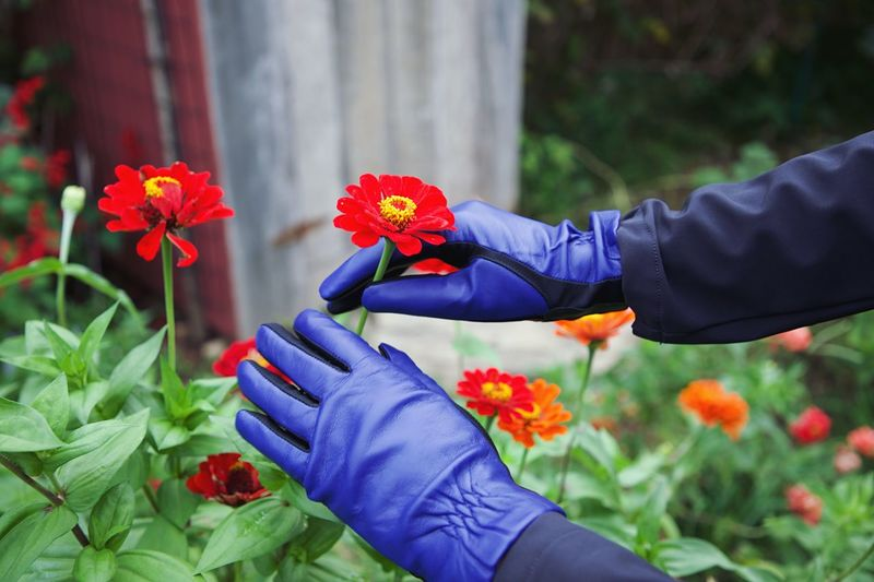 💦♥️ Fall Flower Flowering Plant Plant Human Hand Freshness Hand Real People Holding Human Body Part Fragility One Person Nature Vulnerability  Lifestyles Leisure Activity Beauty In Nature Growth Day Flower Head
