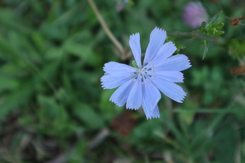 Macro Photography Canon M10 Flower Blue Showcase July Gyula Hungary