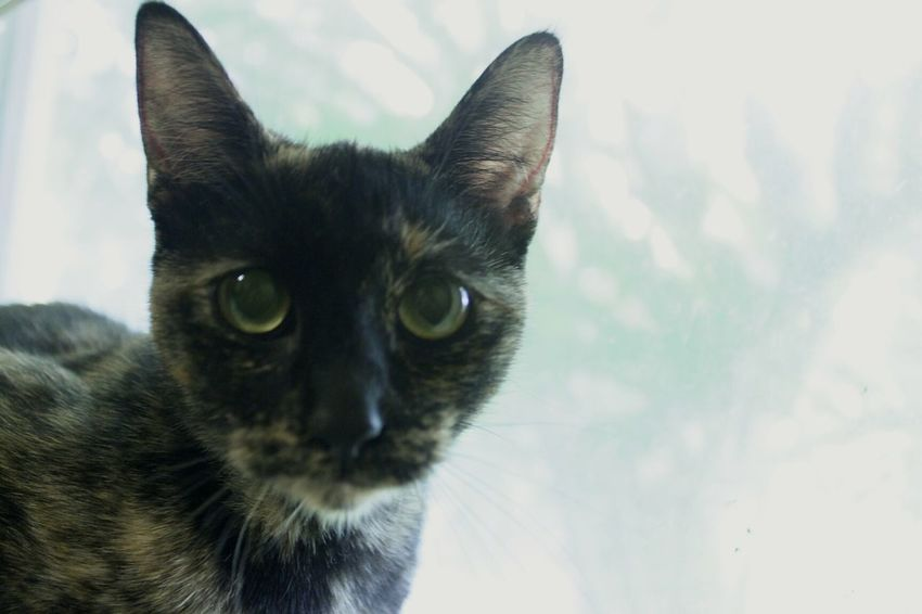 Astra Cat Love Purrfect Personal