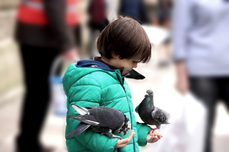 Blessed Moment Boy Calmness Child Peaceful Pigeons Serenity Street Togetherness Tranquility