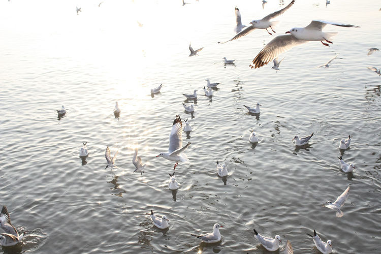 Animal Themes Animal Wildlife Animals In The Wild Beauty In Nature Bird Day Flock Of Birds Flying Lake Large Group Of Animals Nature No People Outdoors Seagull Spread Wings Togetherness Water