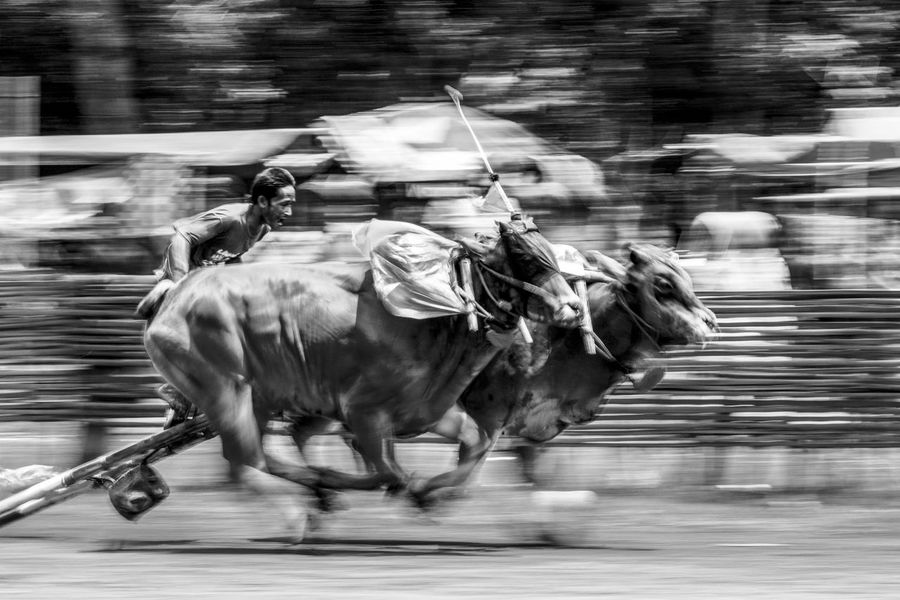Black & White Motion Blurred Motion Speed Mammal Domestic Animals Running Outdoors Day Street People Traditional Culture Panning