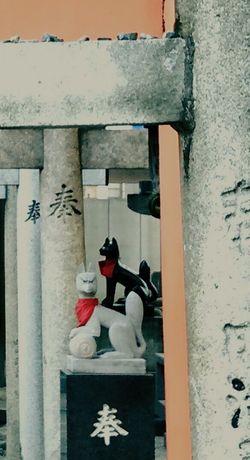 AndroidPhotography Taking Photos Cityscapes Inari Shrine Fox🐺