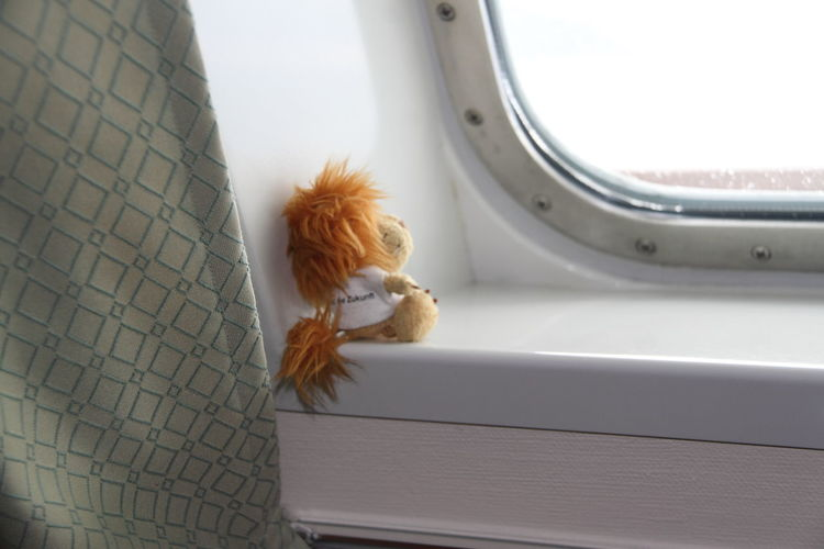 View Of Animal Toy Looking Through Window