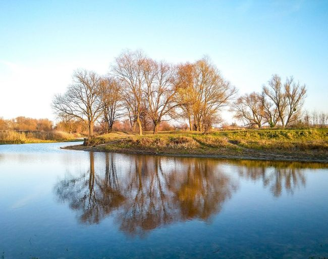 Reflection Reflection Water Landscape Landscape_photography Landscape_Collection Tree Trees Lake Lake View River Riverside River View Riverbank