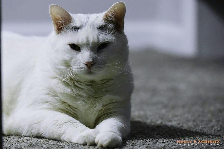 Lumpy Cats Of