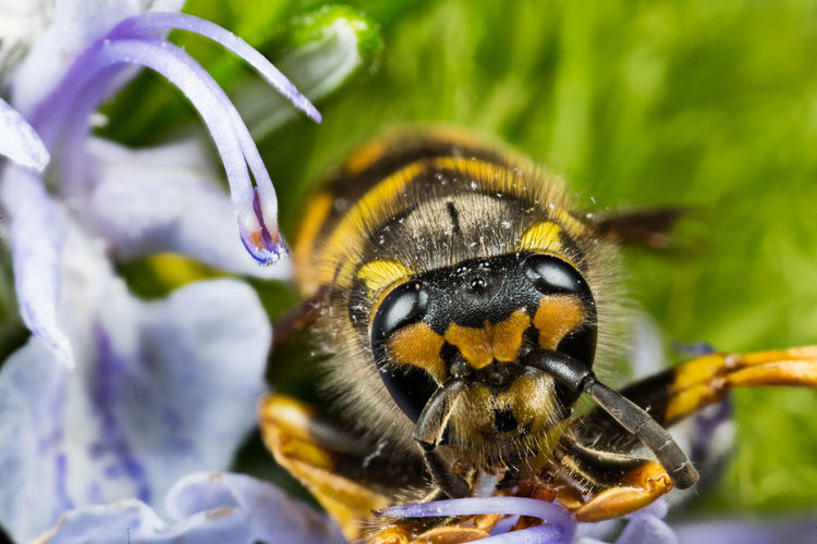Animal Themes Animal Wildlife Animals In The Wild Beauty In Nature Black Close-up Flower Flowers Focus On Foreground Insect Nature One Animal Outdoors Wasp Yellow