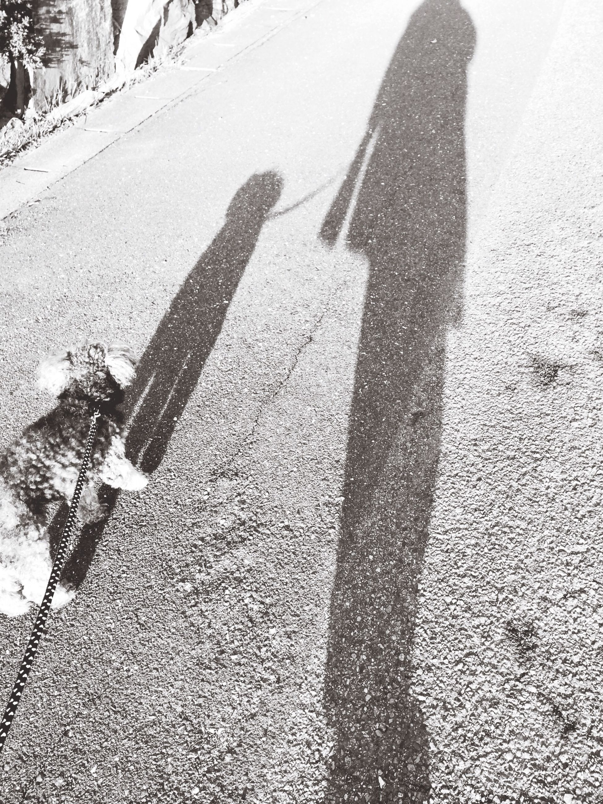 shadow, street, road, high angle view, sunlight, focus on shadow, transportation, road marking, unrecognizable person, asphalt, lifestyles, day, outdoors, leisure activity, men, walking, the way forward
