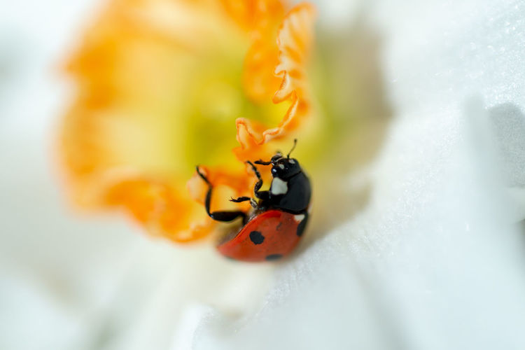 Close-up of ladybug on flower