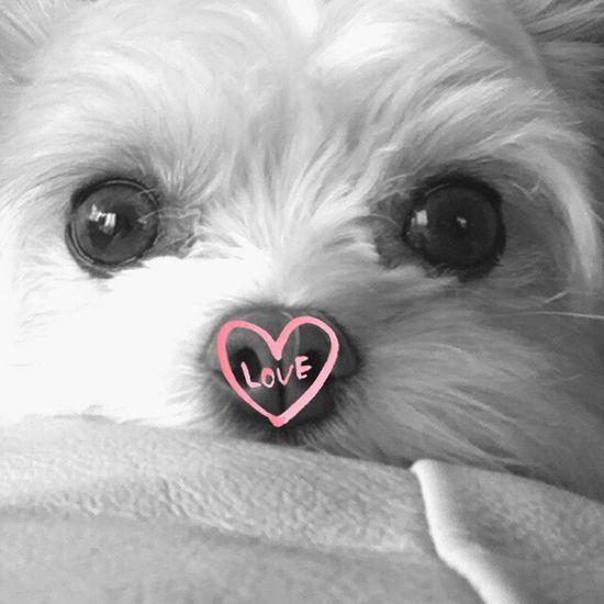 Love Dog 愛犬