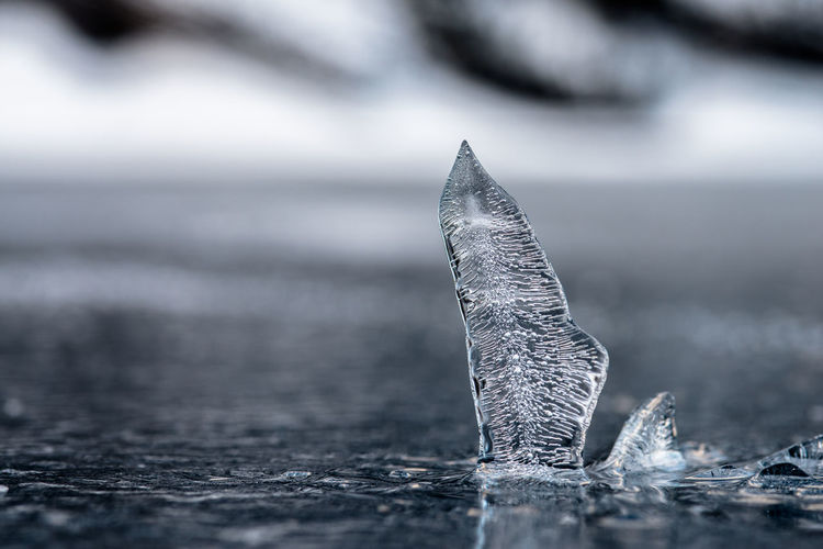 frozen Oeschinensee Focus Object Frozen Ice Macro Photography Perspectives On Nature Animal Themes Animals In The Wild Beauty In Nature Close-up Day Focus On Foreground Humpback Whale Kandersteg Lake Macro Nature No People Oeschinensee One Animal Outdoors Water Whale EyeEmNewHere