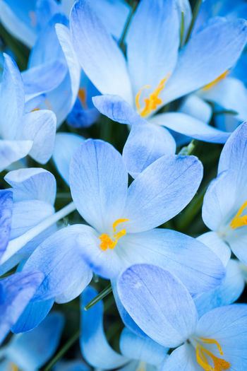 Flower Flowering Plant Vulnerability  Fragility Petal Plant Beauty In Nature Inflorescence Close-up Growth Freshness Flower Head Full Frame No People Nature White Color Purple Springtime Outdoors Backgrounds Pollen Bright Spring