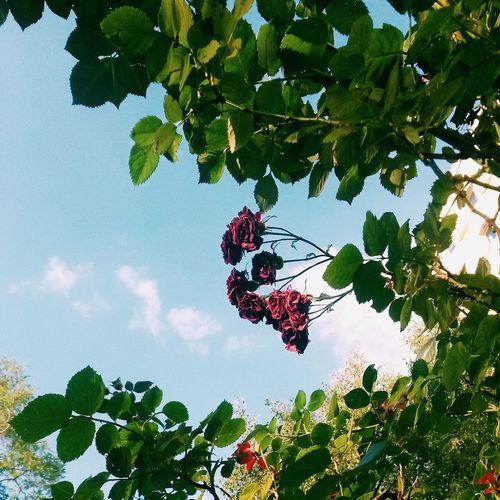 VSCO Flowers Sky Nature