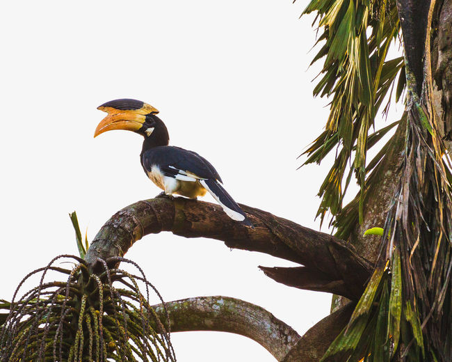 Low angle view of bird perching on a tree