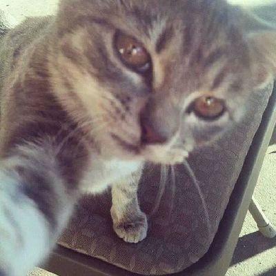 :)) Cat