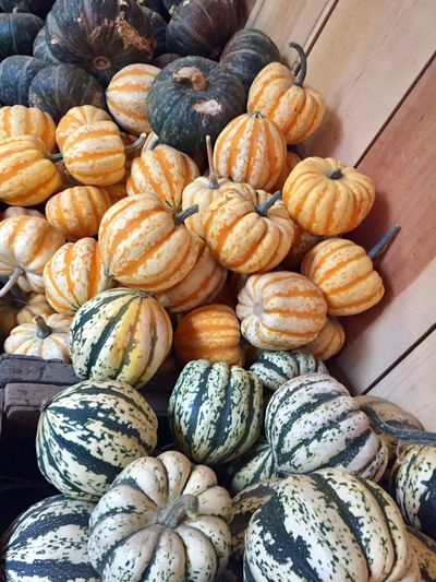 Pumpkins Pumpkin Patch Pumpkins Galore