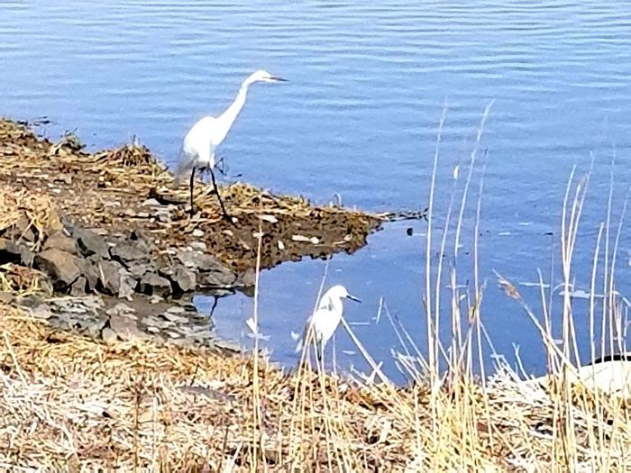 View of heron perching on lakeshore