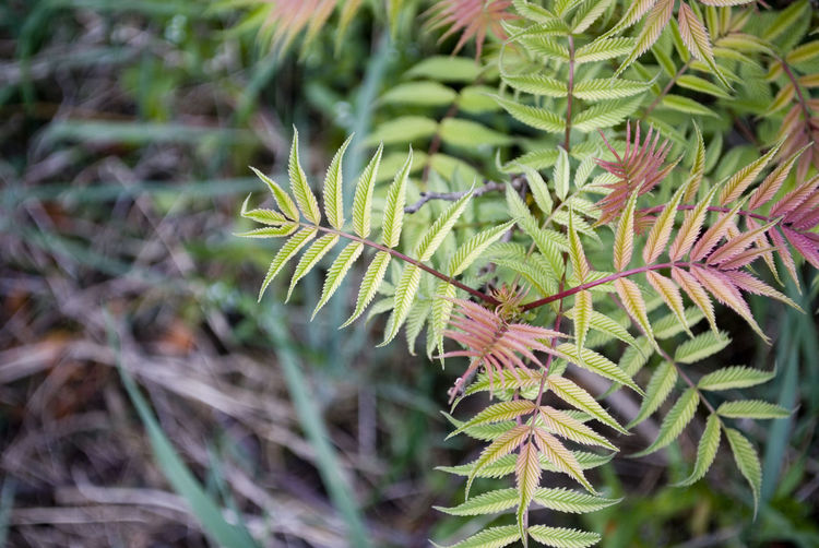 Beauty In Nature Branch Close-up Coniferous Tree Day Focus On Foreground Green Color Growth High Angle View Land Leaf Nature Needle - Plant Part No People Outdoors Pine Tree Plant Plant Part Selective Focus Spiky Tranquility Tree