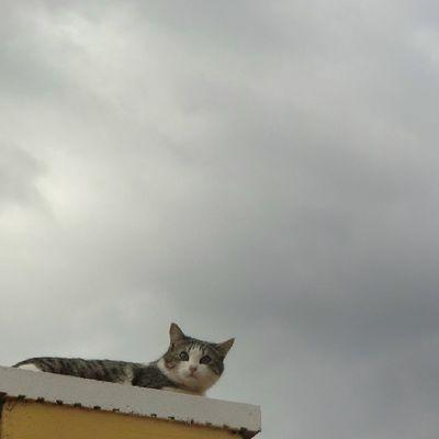 ¿Que llueve?. Skylovers Cat Igerszgz Igersaragon cloudslovers