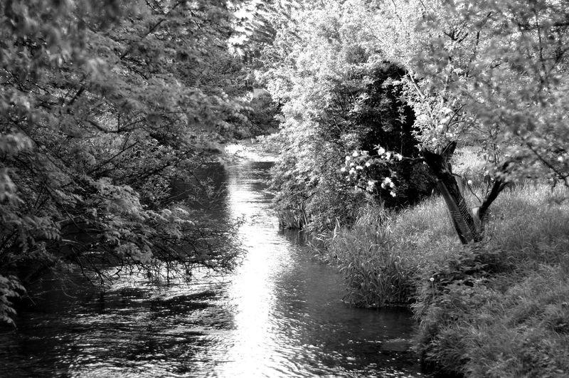 Nature In Black & White