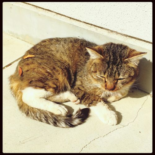 ねむねむ Cat