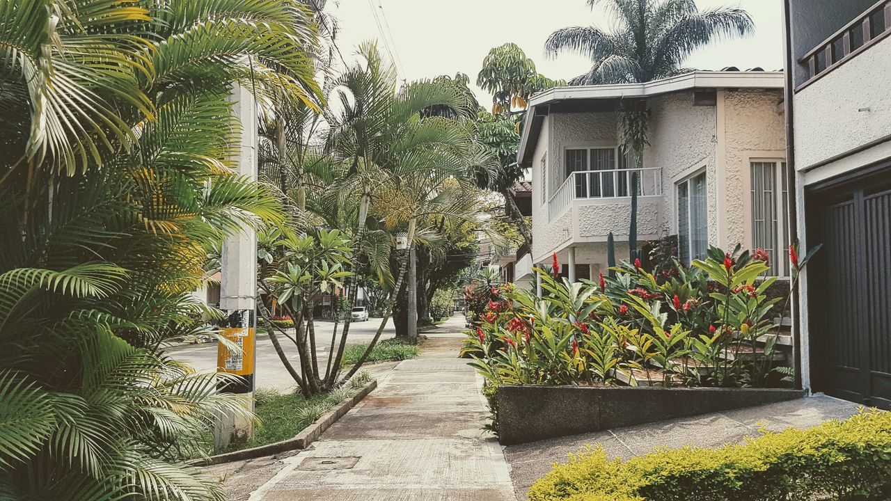 palm tree, growth, plant, architecture, tree, outdoors, nature, building exterior, no people, day