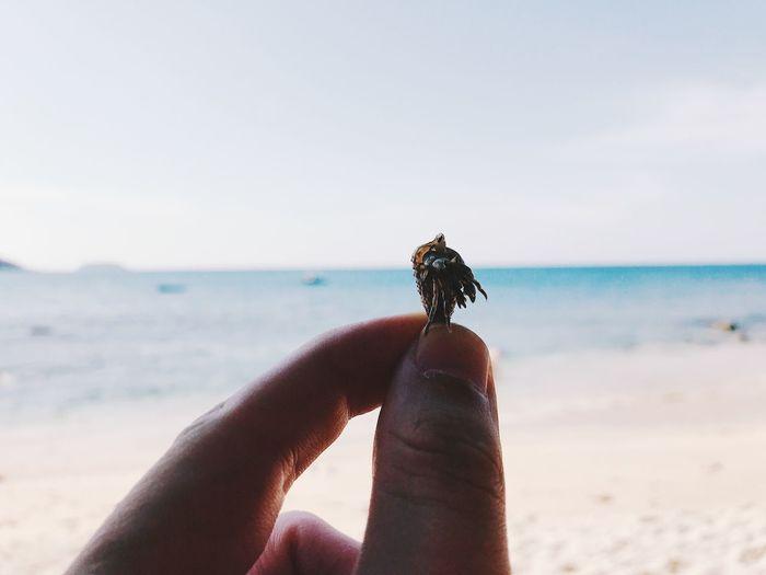 Close-up of hand holding small crab at beach