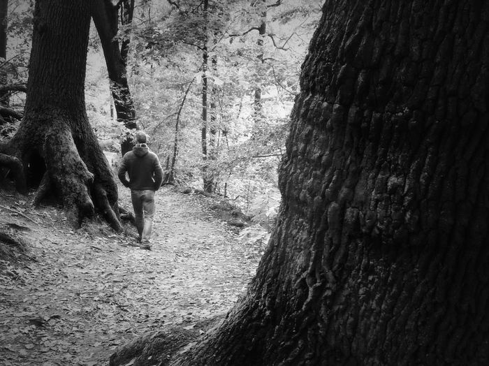 Rear view of woman standing by tree trunk in forest