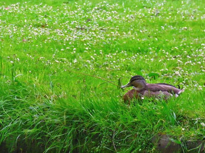 Grass Animals