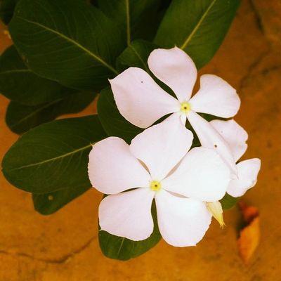 Flower Flowers Ontheroad Madurai Loveit Takeapicture
