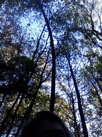 Cesi Terni Low Angle View Tree Nature