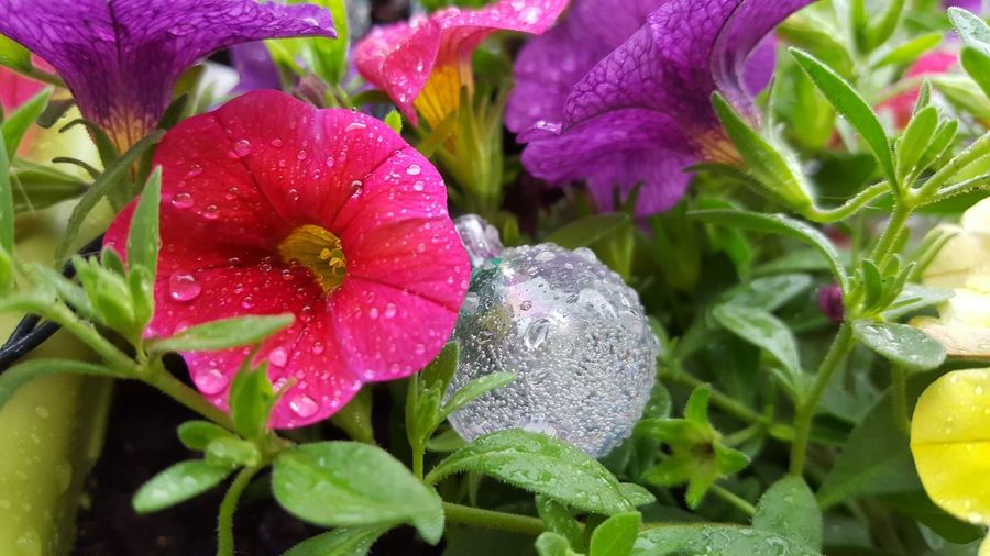 Flower Plant Nature Fragility Growth Leaf Close-up Beauty In Nature Drop Petal Flower Head No People Freshness Water Day Outdoors
