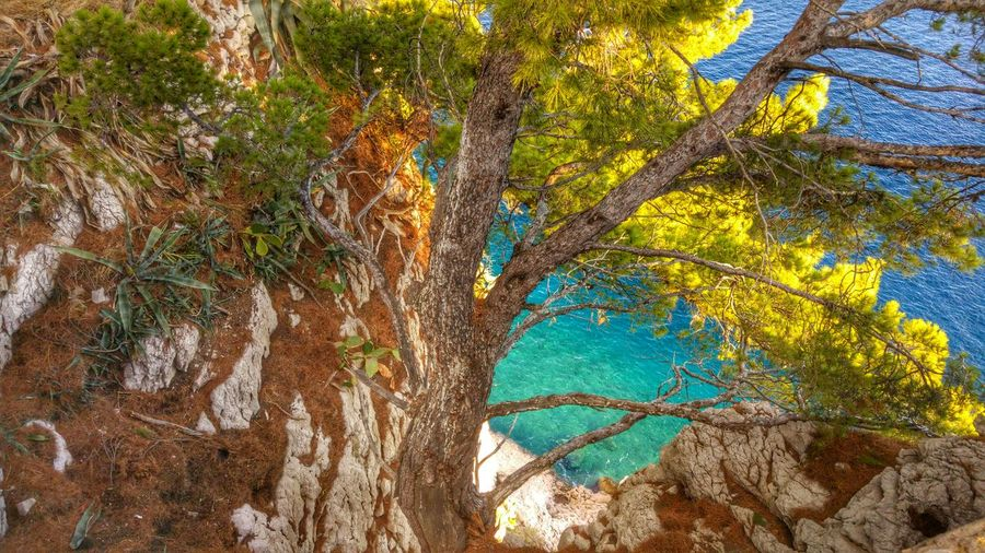 Close-up of tree by sea