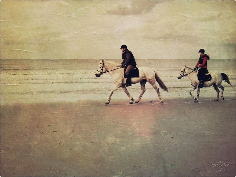 Horseriding at the beach Horse Horses I Love Horses Beachphotography Beach Photography EyeEm Best Edits Check This Out Animal