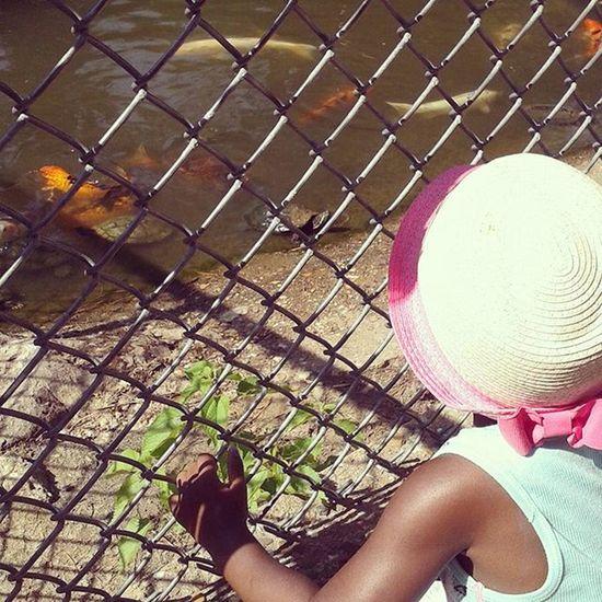 We had to stop at EVERY. SINGLE. FISH FEEDING STATION... Seriously... EverySingleOne Herefishyfishy 🐟 Turtleturtle 🐢 OfCourseIStoppedAtEverySingleOne Letthembelittle TheyreOnlyLittleOnce LilosWorld