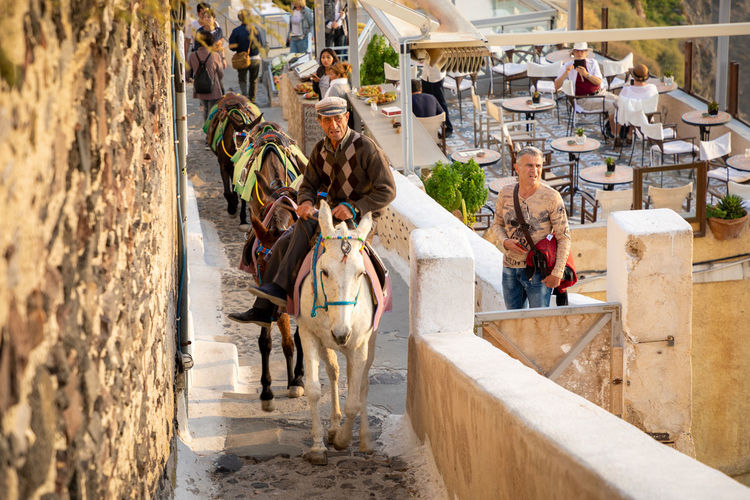 Santorini Greece Domestic Animals Mammal Group Of People Architecture Livestock Group Of Animals Domestic Adult People Men Women Day High Angle View Pets Working Animal Togetherness Donkey Outdoors Herbivorous