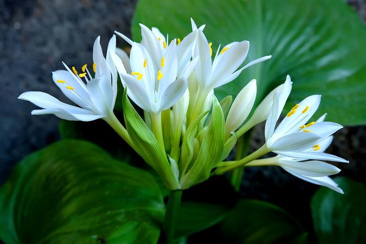 White flower in