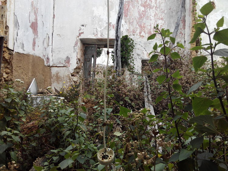 Day Growth Plant Window Architecture Built Structure No People Building Exterior Leaf Outdoors Tree Nature Close-up Greenhouse Freshness Ruins View Ruined Buildings Ruins Of Building Ruins Of A Past Ruinas Ruins_photography Ruine Ruins Architecture Ruined Building Ruins