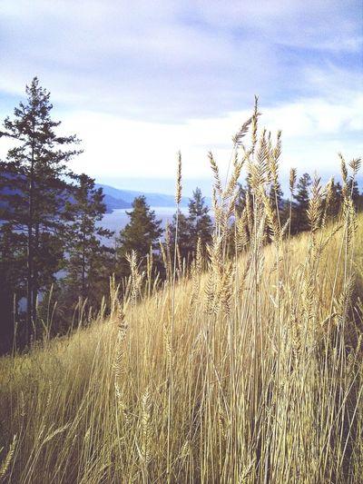 Kelowna Knox Hike Scenery