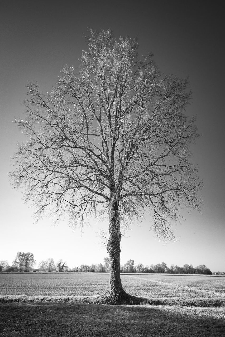 BARE TREE ON LANDSCAPE AGAINST CLEAR SKY