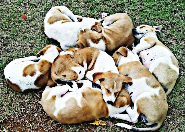 Showcase: February Cute Pets PuppiesMakeMeHappy Puppies ✌ Puppies Sleeping ;) Puppies👌😍😍✌❤💗😜👍 Picart Editing Picartsstudio My Best Shot HDR Effect The Eyeem Collection At Getty Images Mobile_photographer