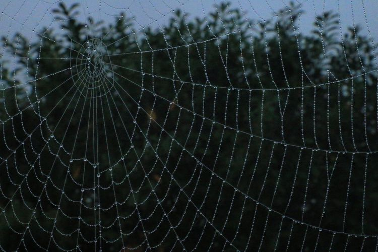Spider Web Web Spider Fragility Nature Outdoors Close-up No People Trapped Animal Themes Backgrounds Drop One Animal Survival Intricacy Day Full Frame Concentric Beauty In Nature Water
