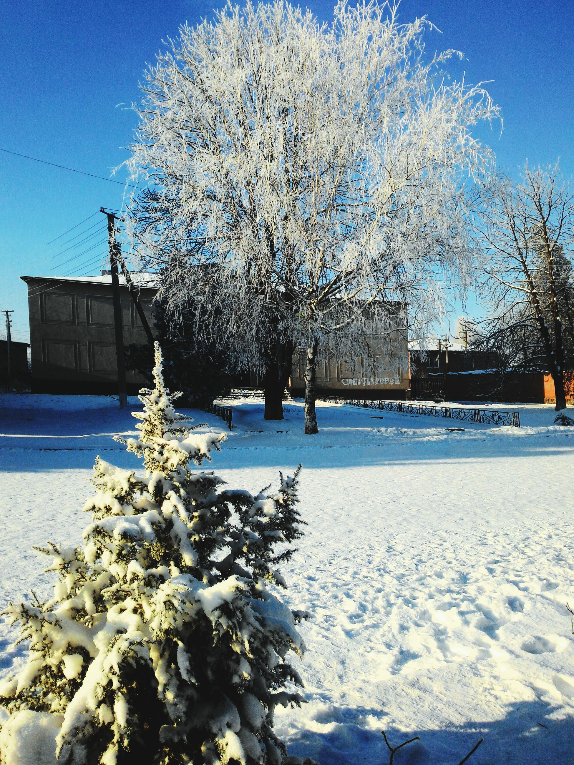 snow, blue, tree, winter, cold temperature, building exterior, built structure, sunlight, architecture, nature, bare tree, season, house, sky, clear sky, white color, tranquility, tranquil scene, beauty in nature, frozen