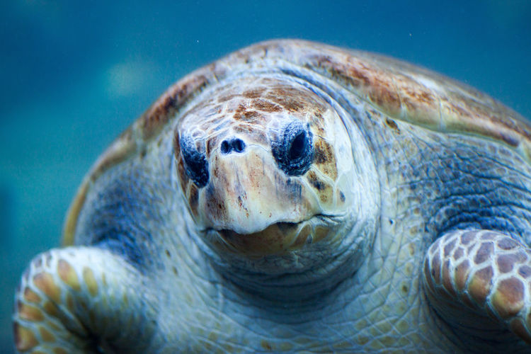 A loggerhead sea turtle through the glass of an aquarium Animal Head  Beauty In Nature Close-up Distorted Loggerhead Loggerhead Turtle Portrait Reptile Turtle Wildlife Zoology