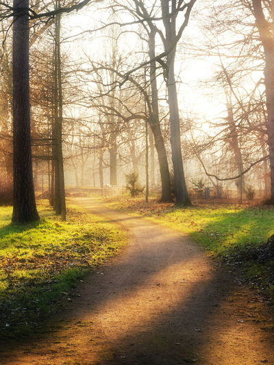 Bare Tree Beauty In Nature Day Fairytale  Field Fog Grass Landscape Mini Nature No People Outdoors Scenics Sky Sunlight The Way Forward Tranquil Scene Tranquility Tree