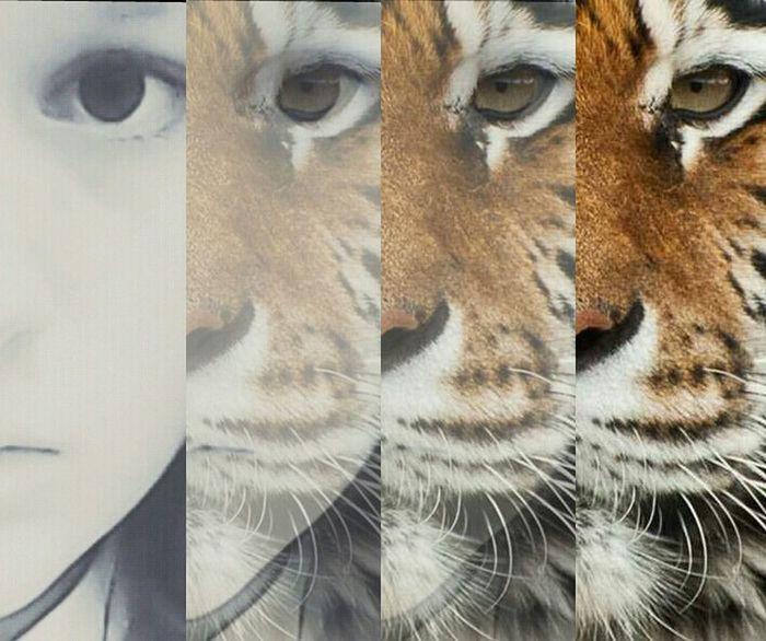 Arrr Tiger I